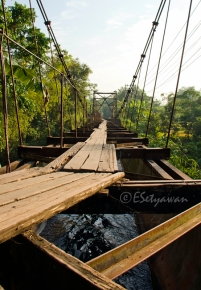 Ply woods have become the stepping paths of the bridge.