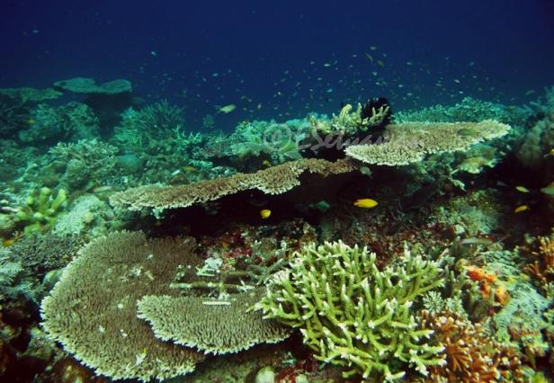 Coral reef at Raja Ampat Islands, West Papua