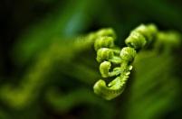 Tumbuhan paku sangat mudah dijumpai di hutan-hutan tropis dengan basah.